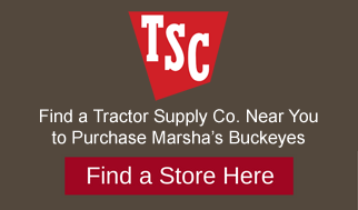 Marshas buckeyes candies at Tractor Supply Co